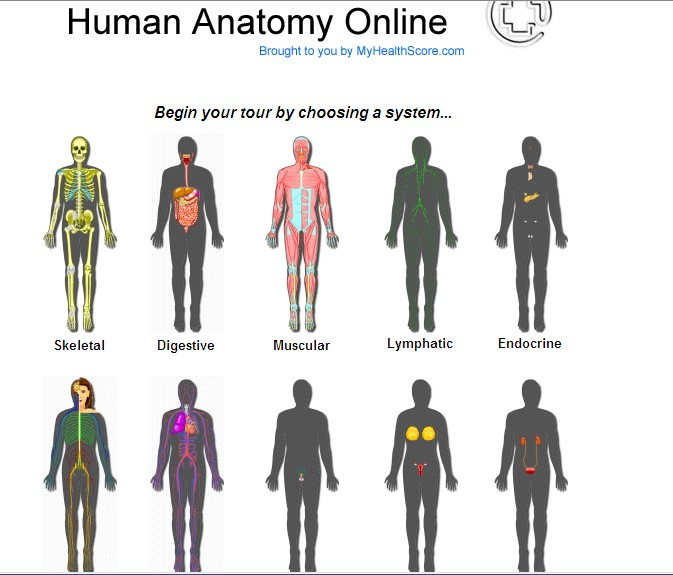 Computer Kiddos Wiki Human Body Unit